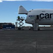 Beluga whales safely land in Iceland