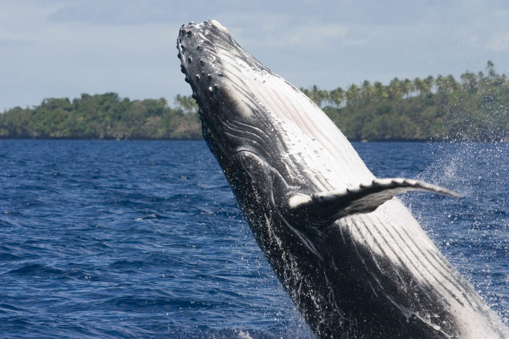 Whales, dolphins, porpoises and healthy seas under lockdown