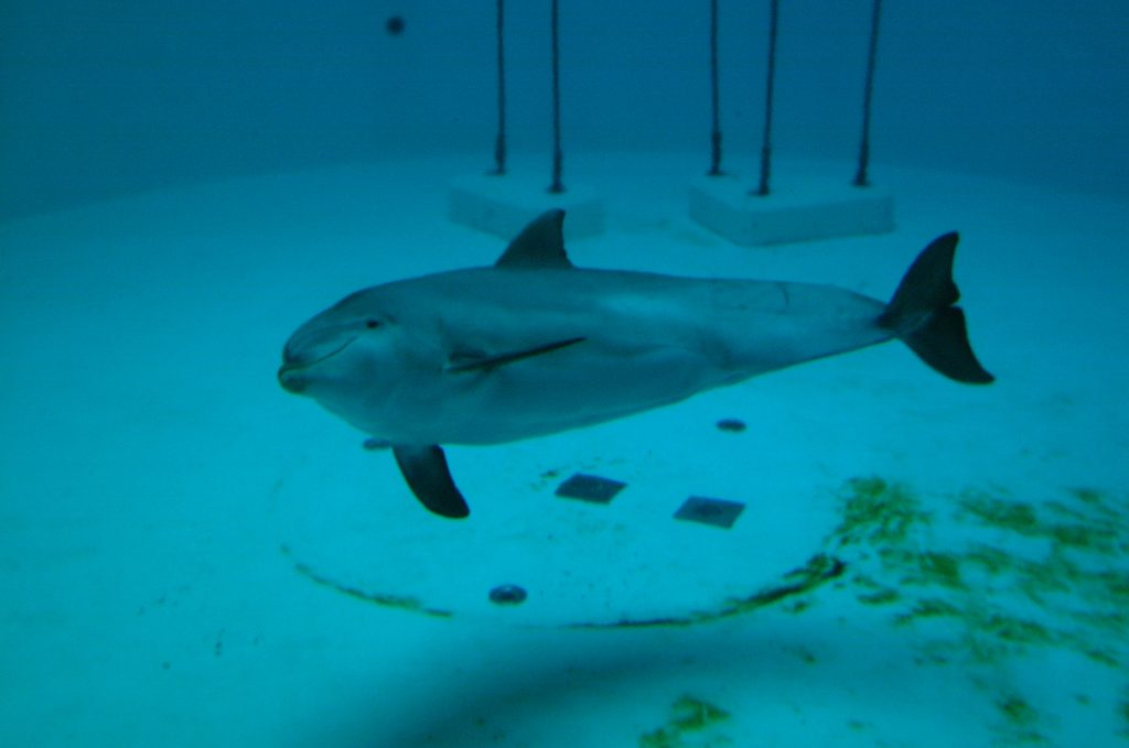 Life in lockdown – is this what captivity for whales and dolphins is like?