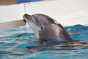 Two more young dolphins die in European theme parks just days apart