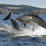 Dolphin group