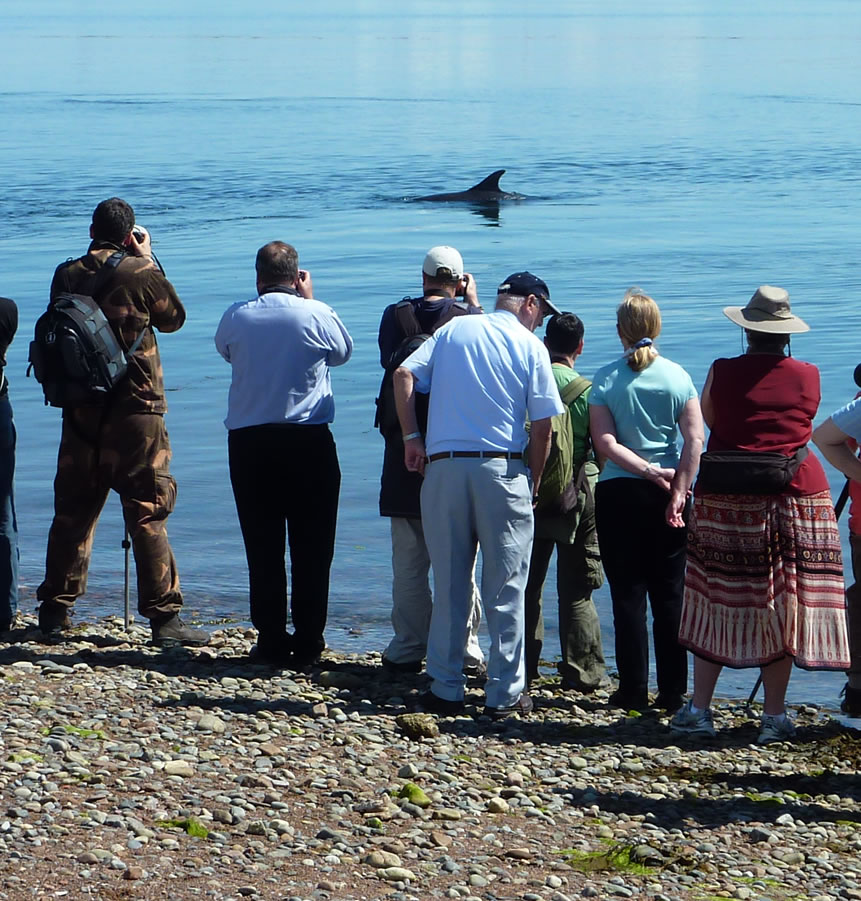 Dolphin watching at Spey Bay