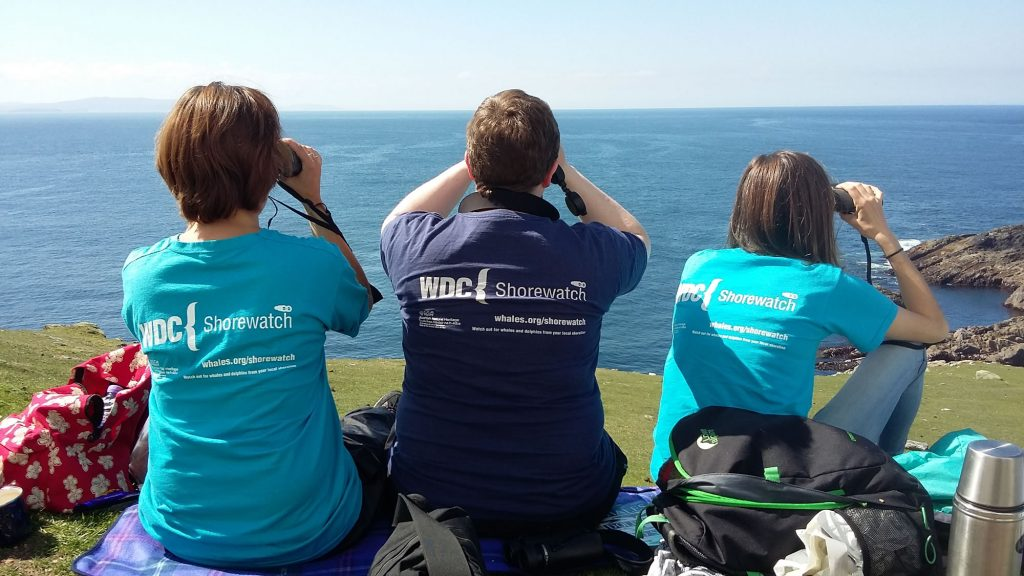 Carrying out survey for Shorewatch