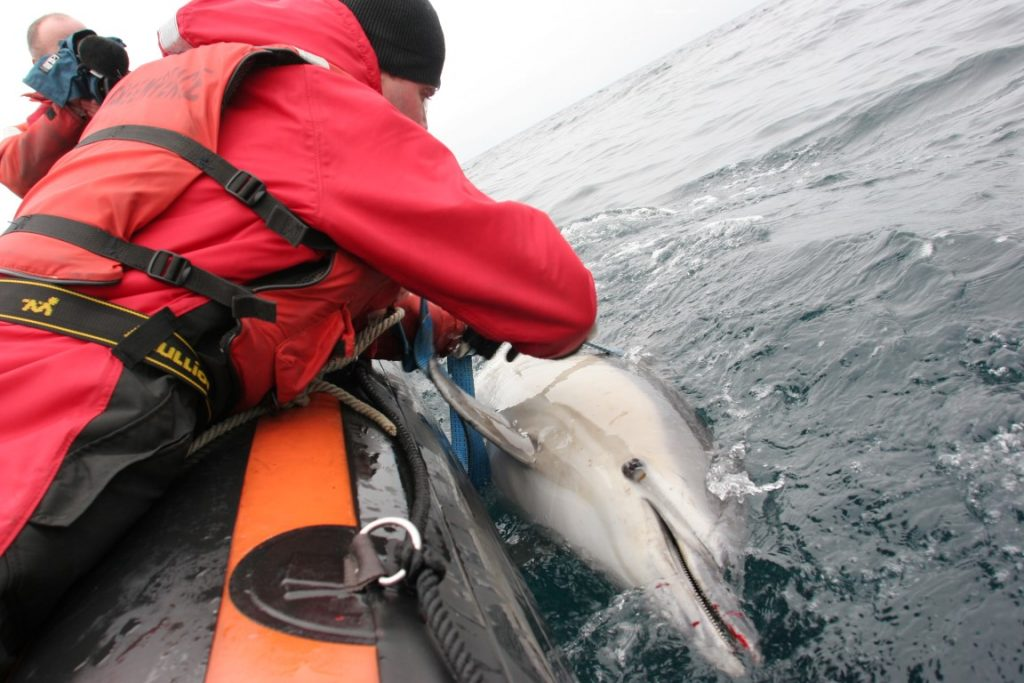 What does coronavirus mean for the future of fishing and our efforts to prevent dolphin deaths in nets?