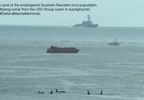 srkw_shoup_2003_text