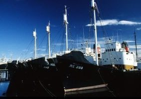 whaling_iceland